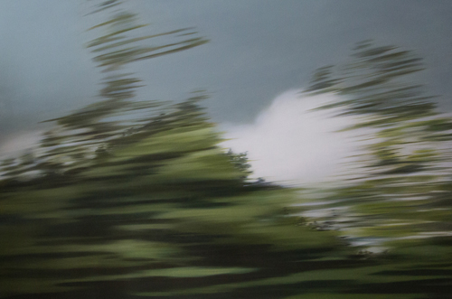 Patricia Morris - Ontario Trees
