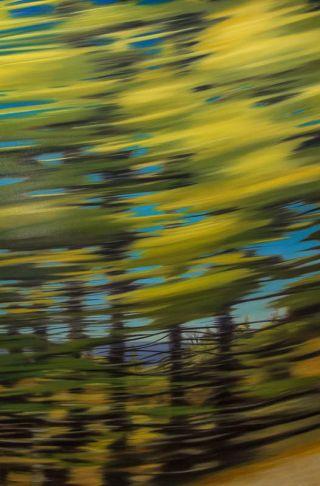 http://intranet.saintdizier.com/images/art/5_TallSpruce_NL_4x6.jpg