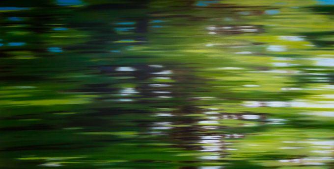 Patricia Morris - British Columbia Trees