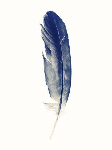Lyle Owerko - Eagle Feather 2