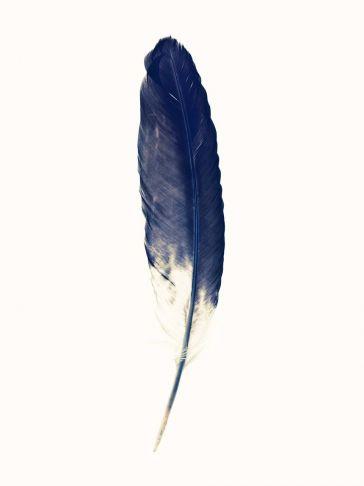 Lyle Owerko - Eagle Feather 3