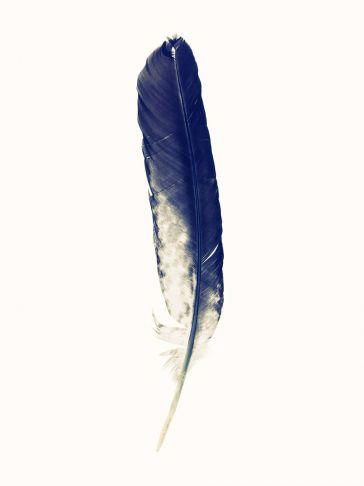 Lyle Owerko - Eagle Feather 5