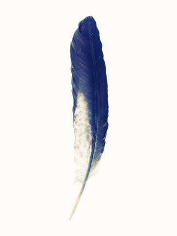 Lyle Owerko - Eagle Feather 7