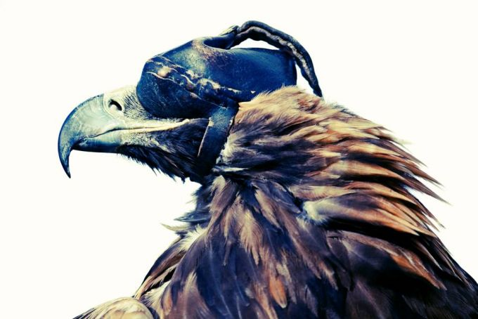 Lyle Owerko - Eagle Hunter 1