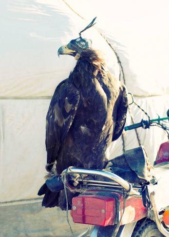 Lyle Owerko - Eagle Hunter 14