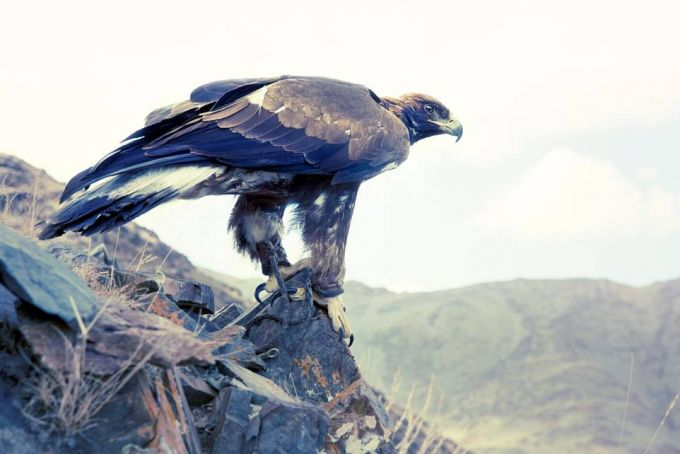 Lyle Owerko - Eagle Hunter 17