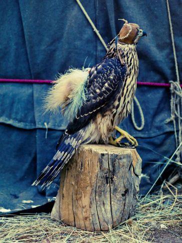 Lyle Owerko - Eagle Hunter 2 ed 1/9