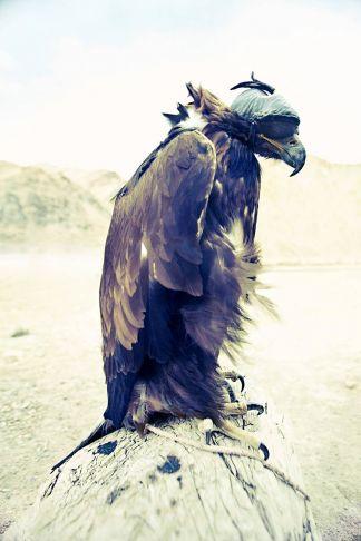 Lyle Owerko - Eagle Hunter 3 ed 1/9