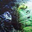 Martin Rondeau - Mohawk Tropic